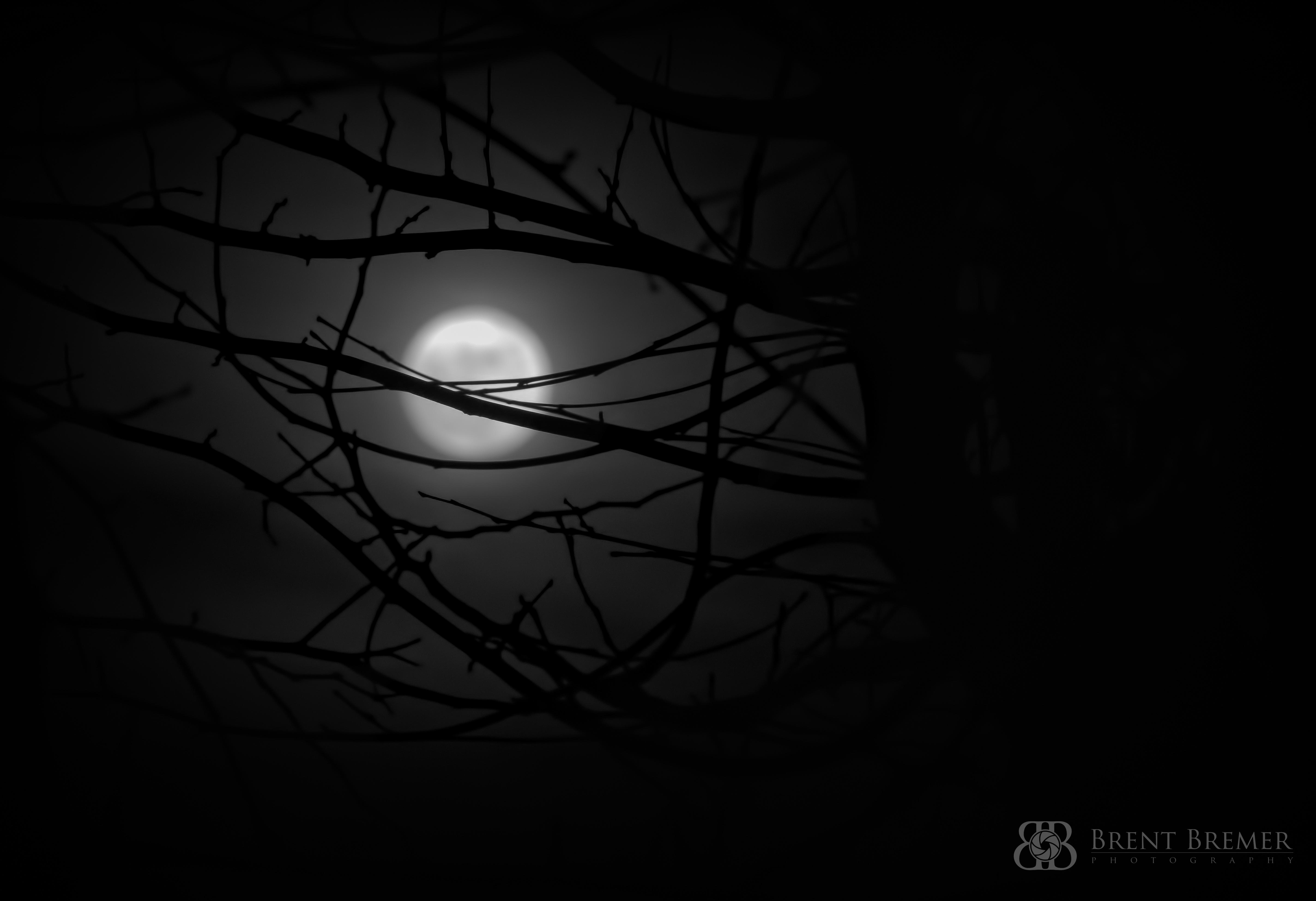 Foggy Moon Silhouette