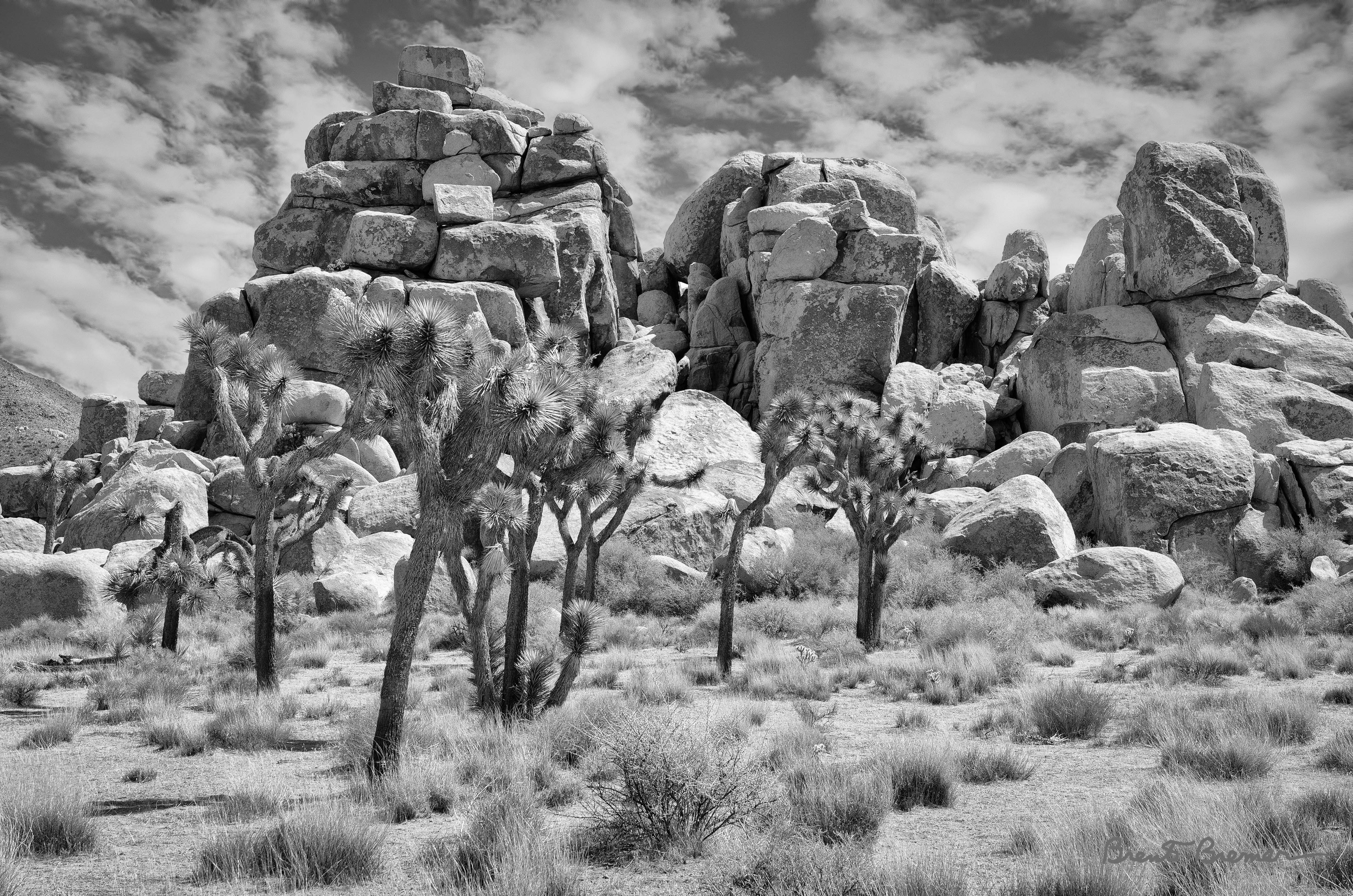 Joshua Tree National Park - Brent Bremer