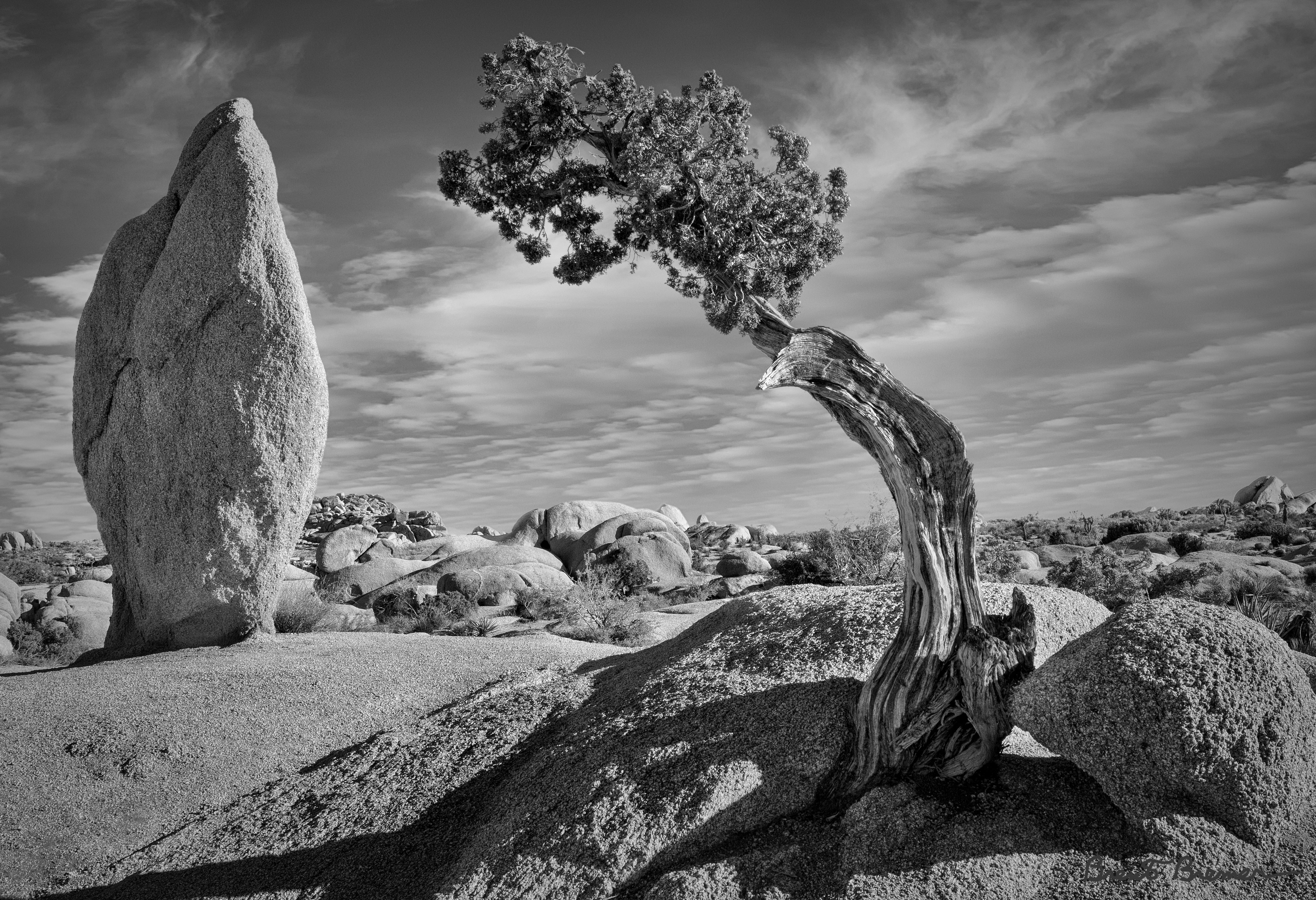 Monolith and Juniper - Brent Bremer