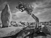 Monolith and Juniper - Brent Bremer