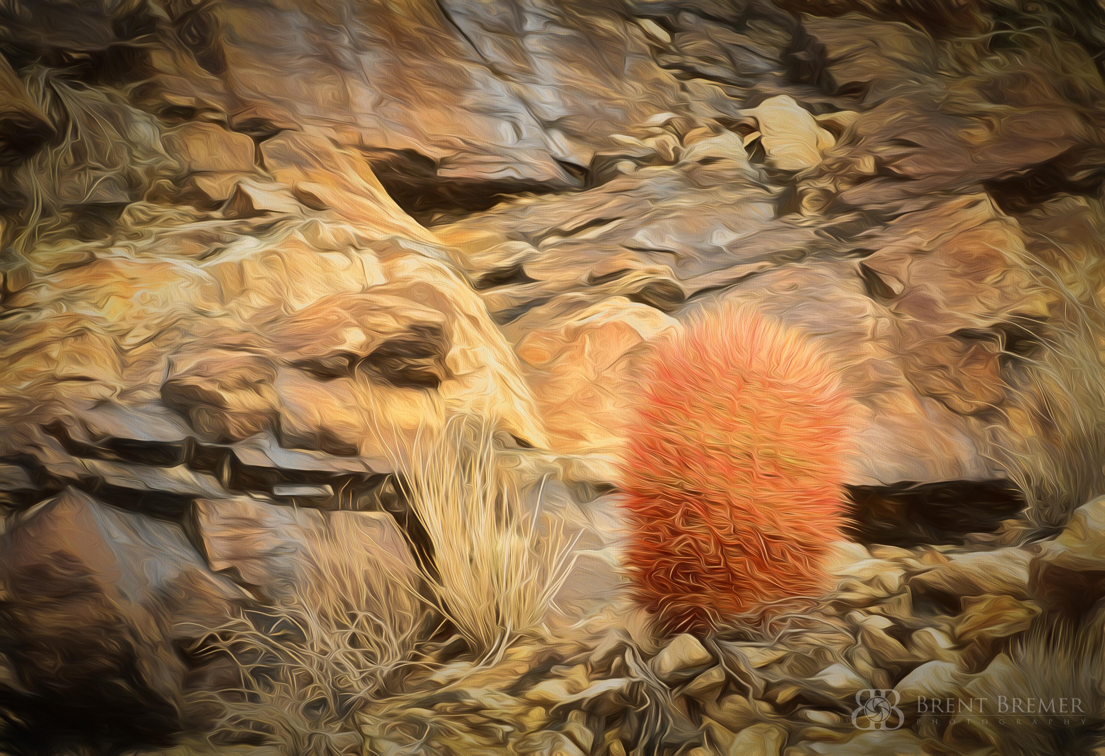 Lone Barrel Cactus Art