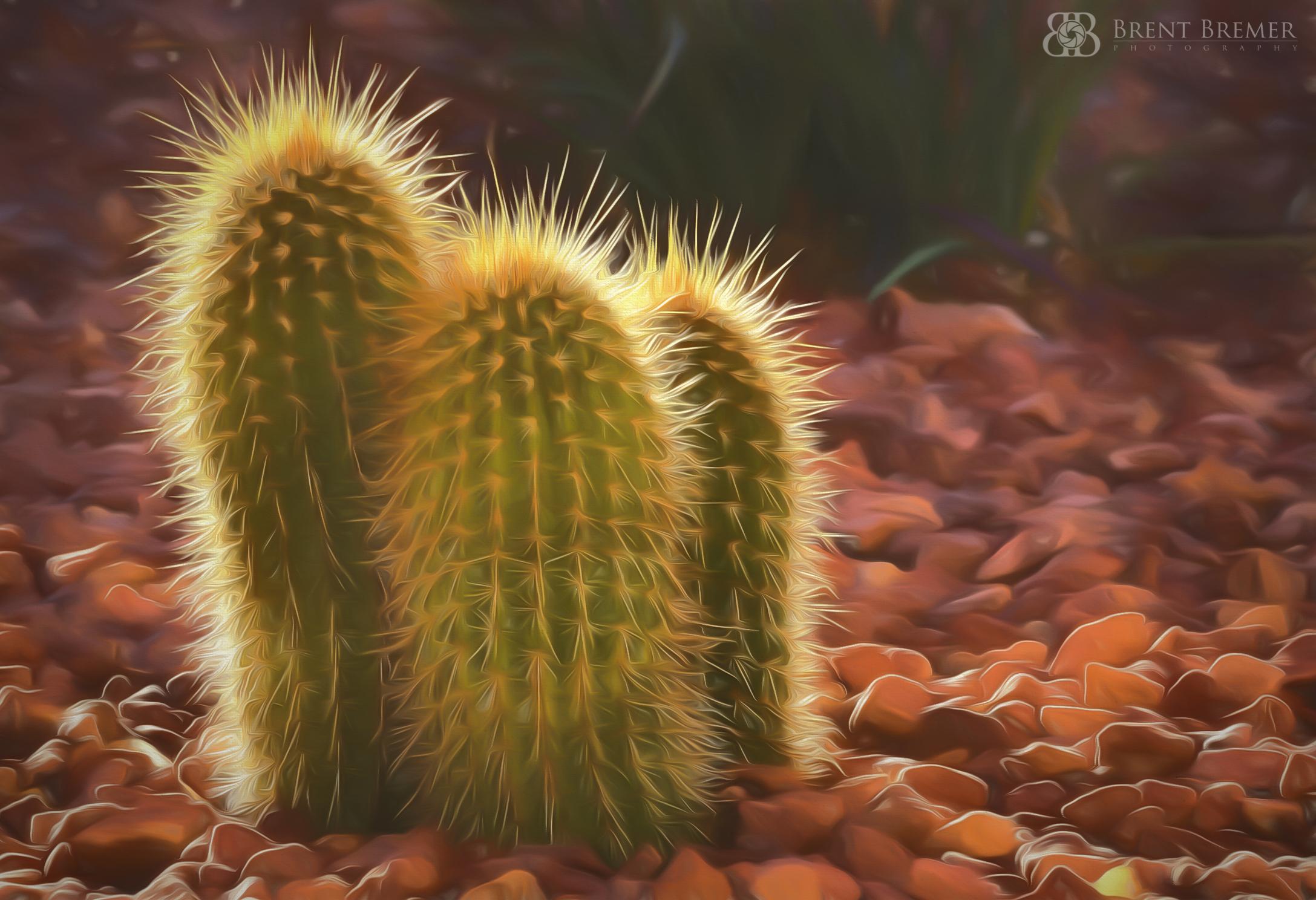 Triple Cactus Art