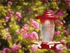 The Hummingbird Feeder Art