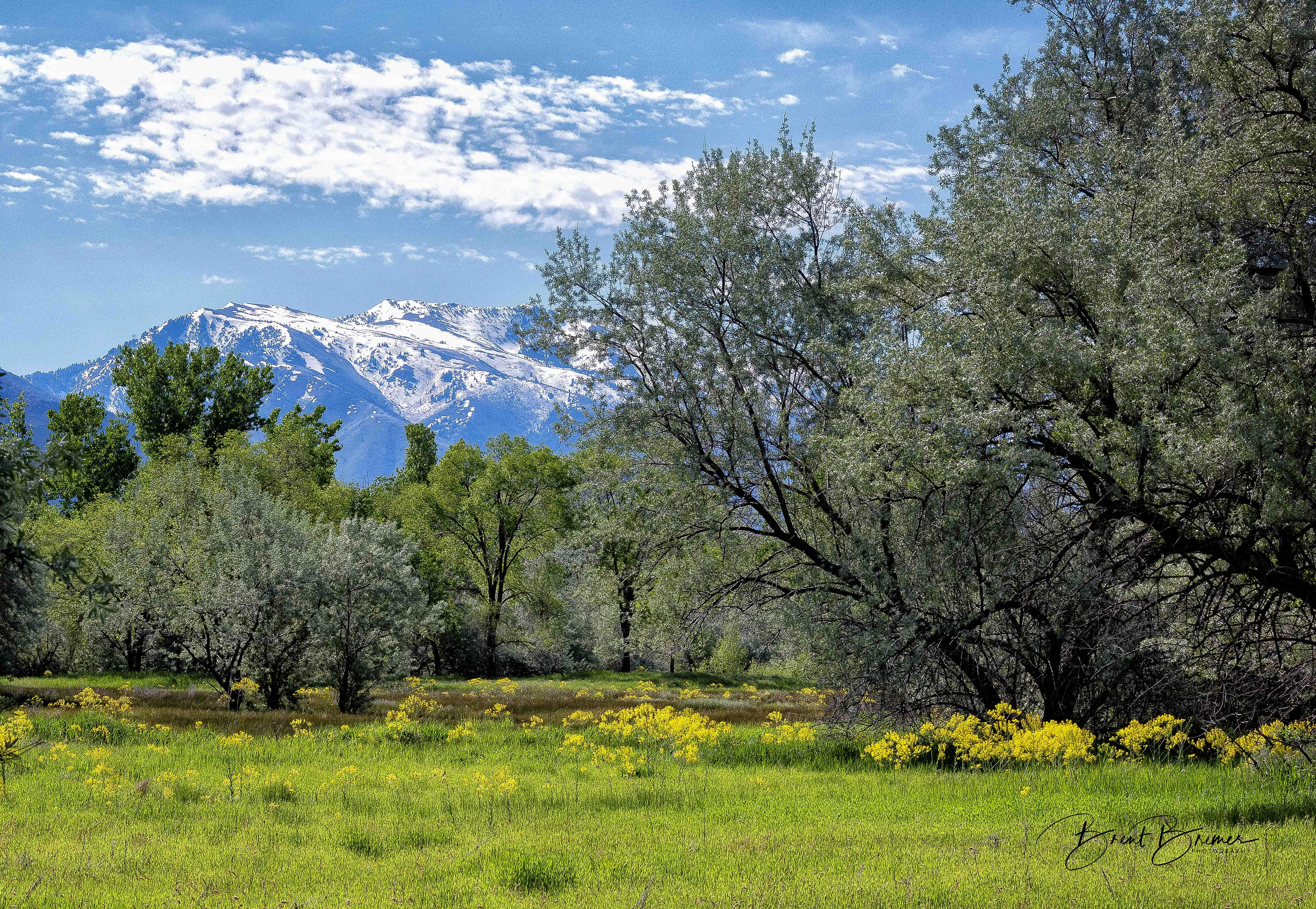 Ogden Utah Scene
