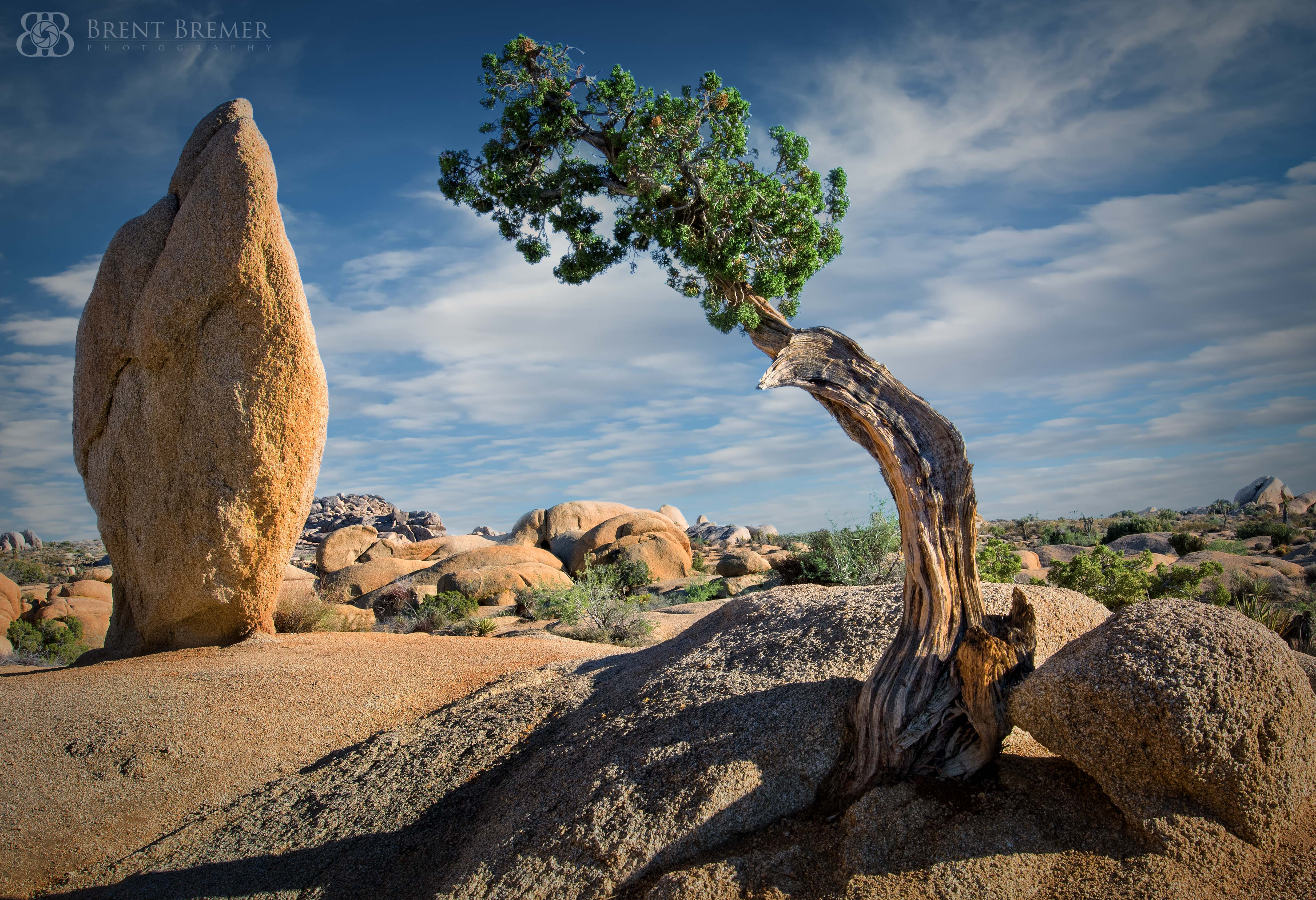 The Juniper and the Monolith