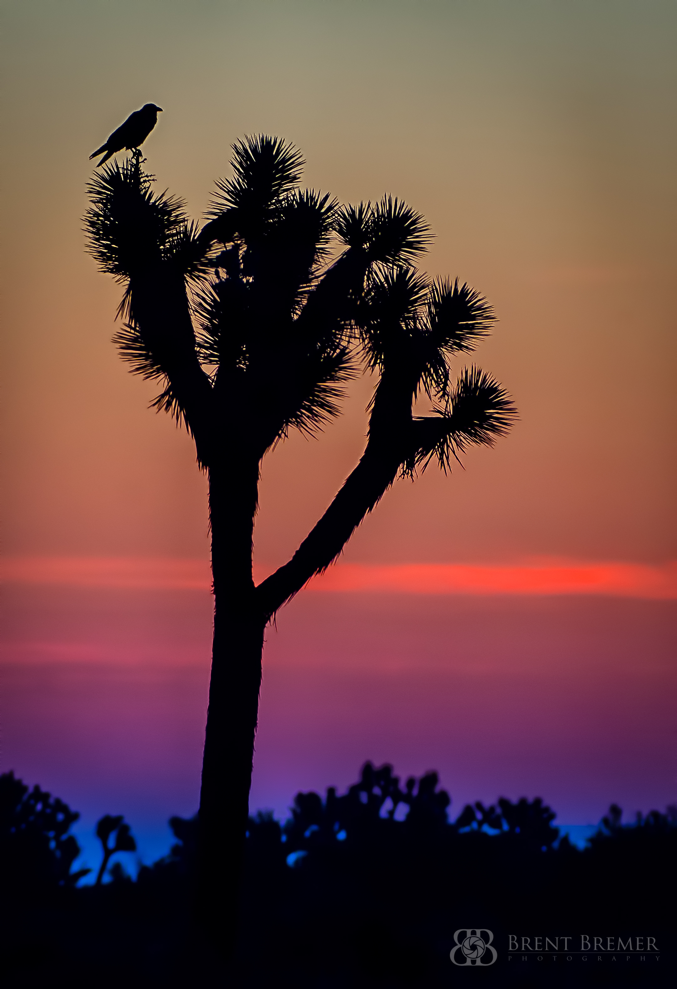 Joshua Tree and Raven Sunrise