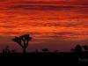 Dawn Sky Burn