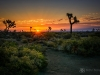 Desert Sunrise-2