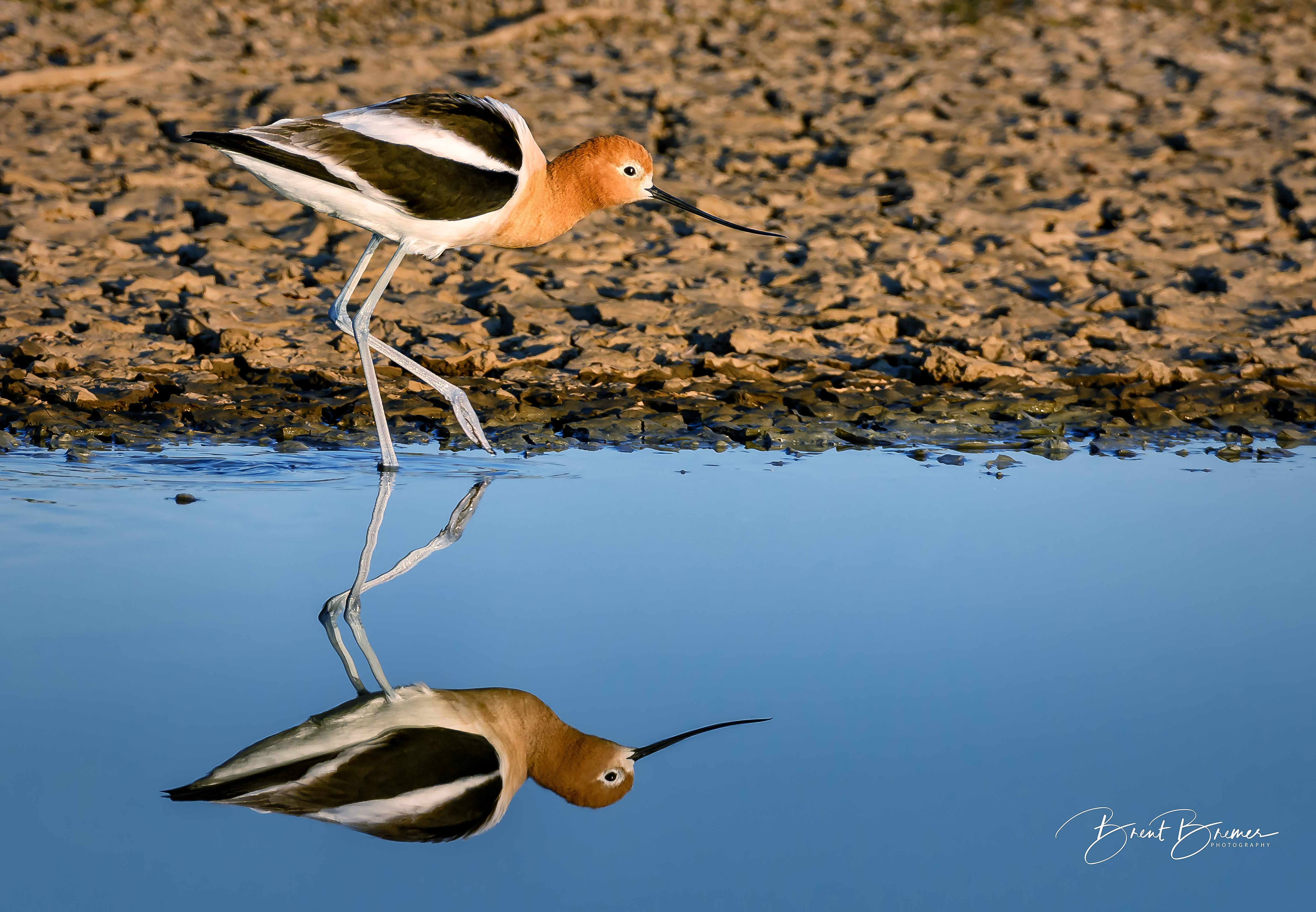 Avocet Mirror