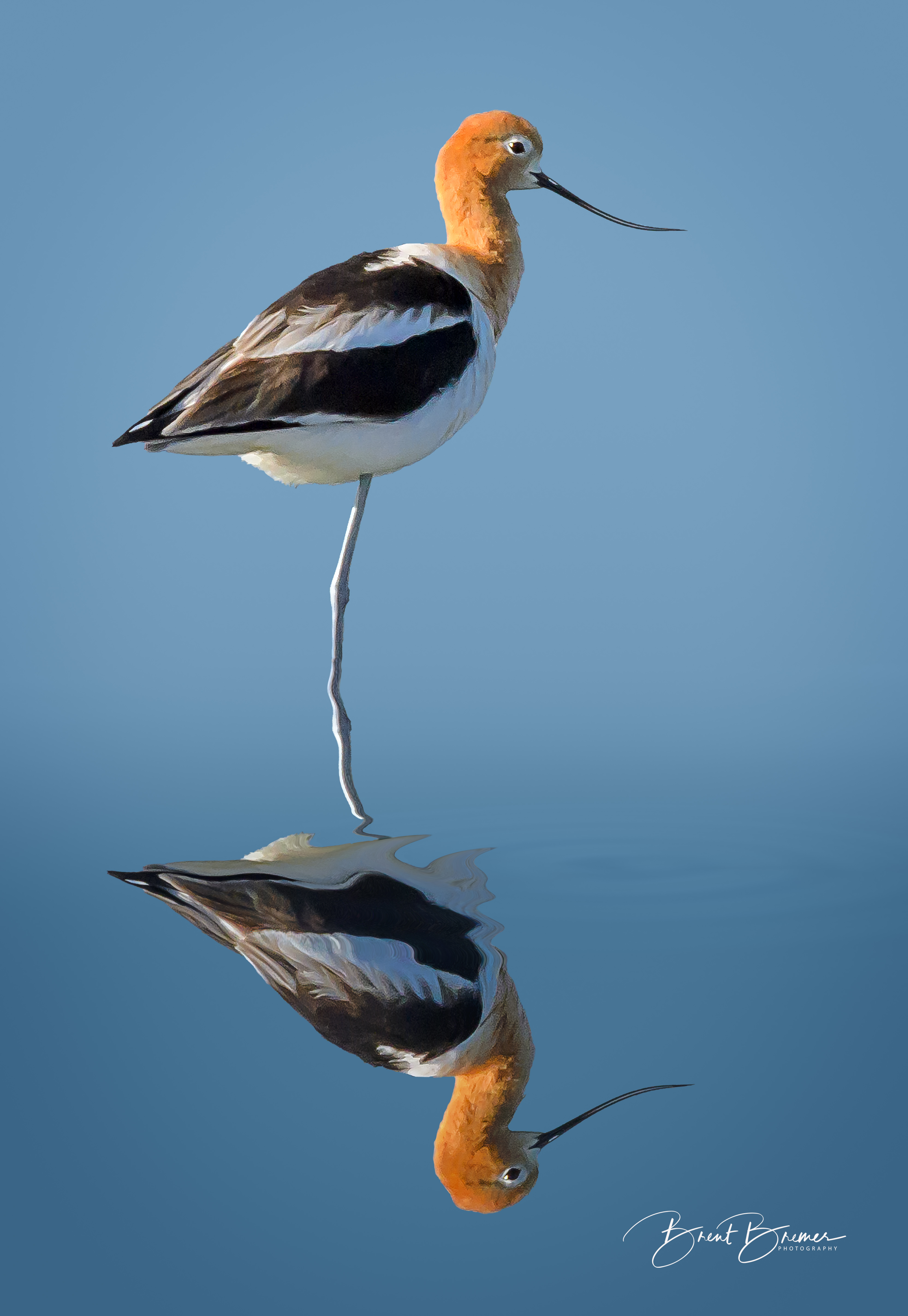 Avocet Vertical