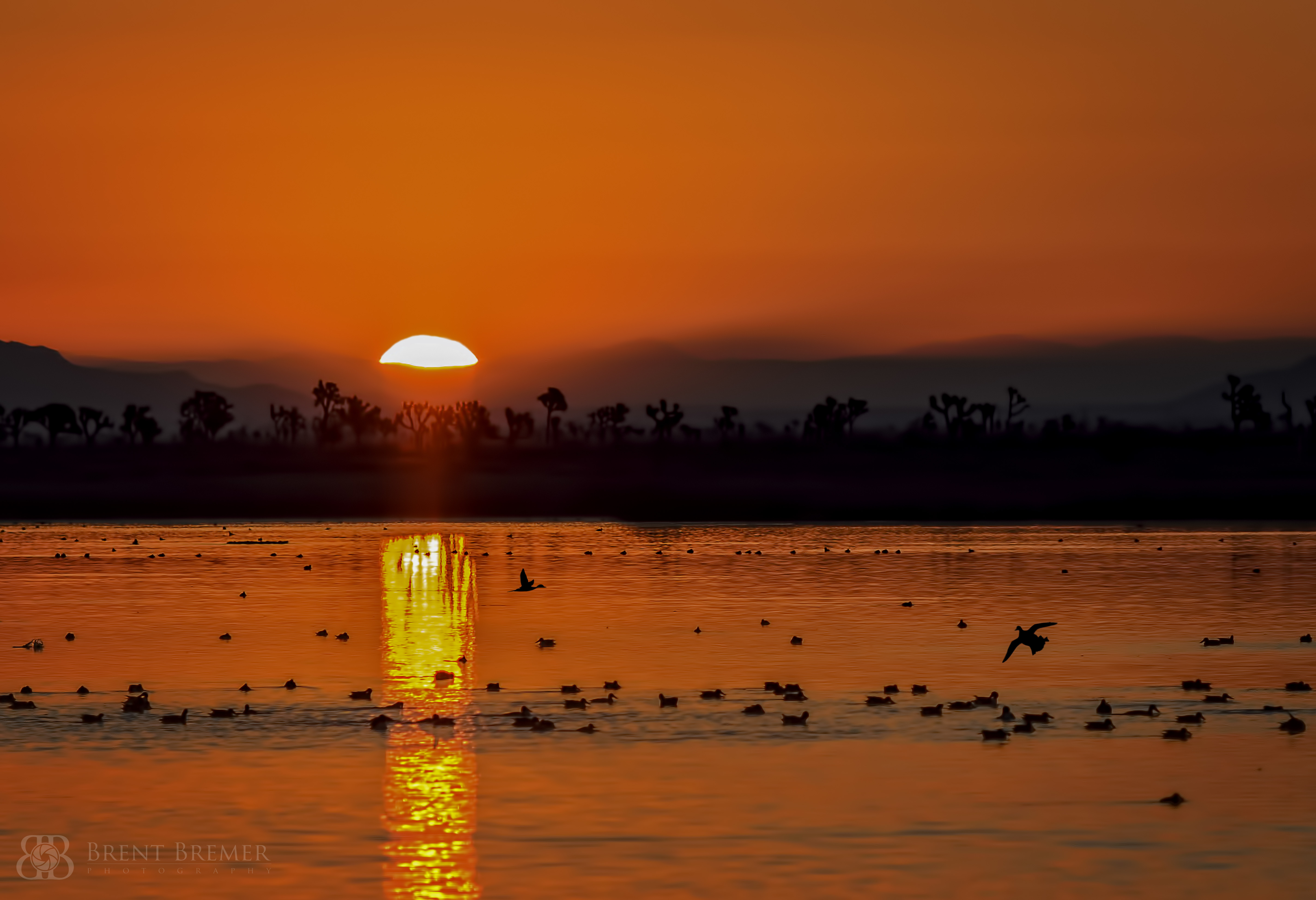 Waterfowl Sunrise