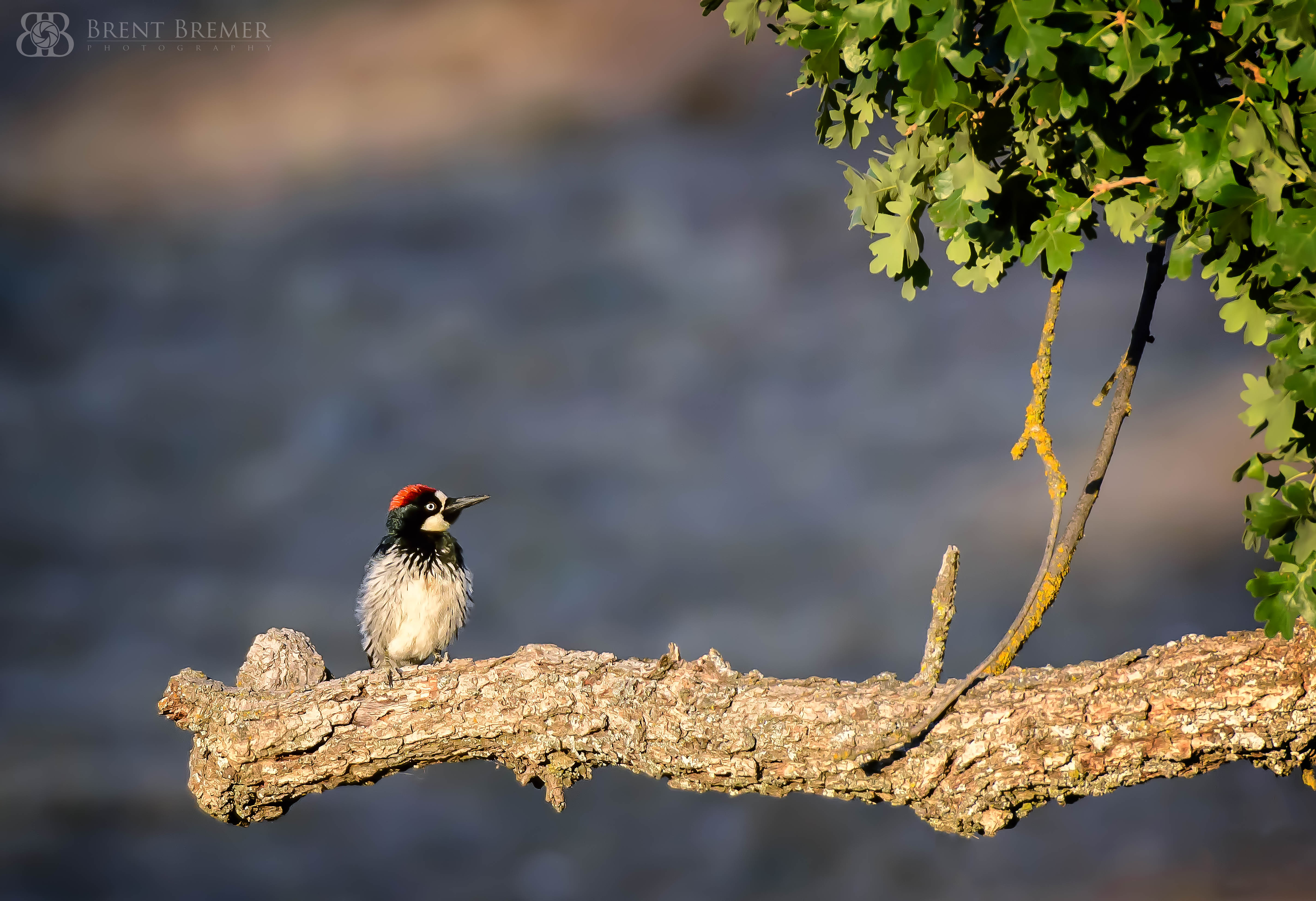 Woodpecker at Sunrise