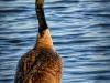 Canada Goose Vertical