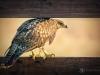 Hawk Searching