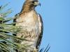 Hawk Vertical