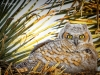 Owlet Posing