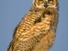 Owlet Ready for Flight