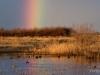 Piute Ponds Rainbow
